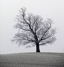 notes of lonely frosty tree
