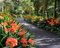 651 best tropical garden idea u0027s images on pinterest tropical