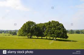 trees in great park berkshire uk stock