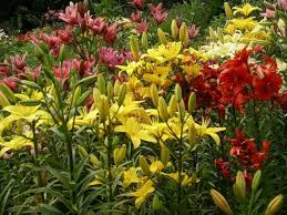 63 best about plants and flowers images on pinterest annual