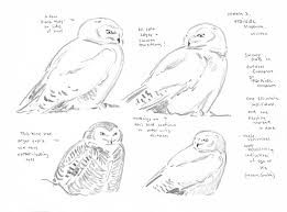 taking flight a mass audubon blog