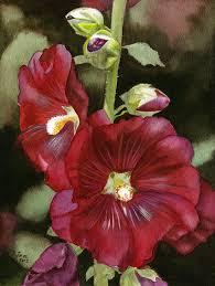 Hollyhock Flowers Red Hollyhock Flower Watercolor Painting