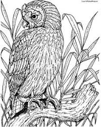mythical creatures coloring pages coloring pages seafood