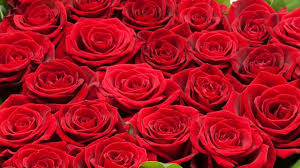 Types Of Flower Gardens Which Types Of Roses Best Suits For Landscape Gardening Rose