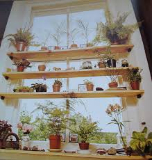 decoration great ideas make nature window treatment wooden plant