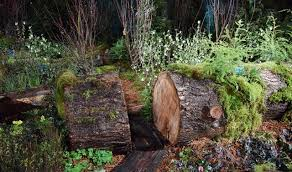 hoh rain forest display wins four awards at the garden show the