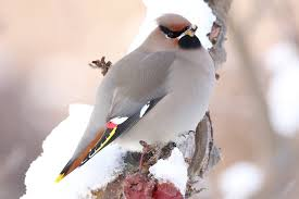 top 8 foods to feed birds during the winter