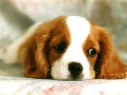 best wallpapers dog wallpapers