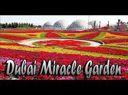 dubai miracle garden butterfly garden best garden world best