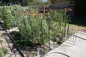 andie u0027s way arched tomato trellis
