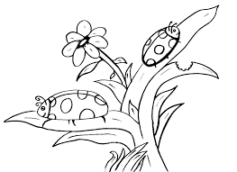 free coloring lady bug coloring