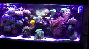 led reef lighting reviews china led reed light wifi review galaxyhydro youtube