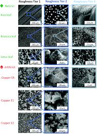 texture and wettability of metallic lotus leaves nanoscale rsc
