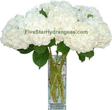 hydrangeas flowers wholesale bulk white hydrangea white hydrangea flowers