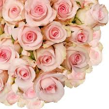 pink and roses fresh flowers light pink roses 16 125 stems walmart