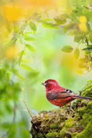1074 best bird images on pinterest animals photos and birds