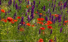 nature flowering plants news and facts