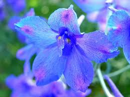 delphinium tag wallpapers flower butterfly gladiola blue