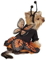 Halloween Costumes Small Dogs Zack U0026 Zoey Monarch Butterfly Costume Dog Halloween Costume