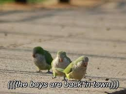 Funny Bird Memes - the birds are back in town the boys are back in town know your meme
