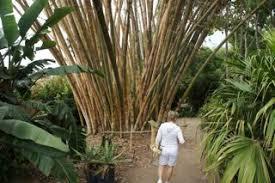 San Diego Botanical Garden Foundation San Diego Botanic Garden Gardenerscott