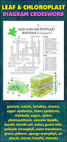leaf and chloroplast crossword with diagram editable student