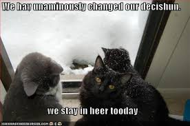 cats snow meme