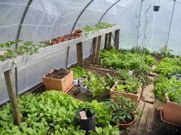 serre jardin d hiver pourquoi semer sous serre ou sous abri jardiner avec jean paul