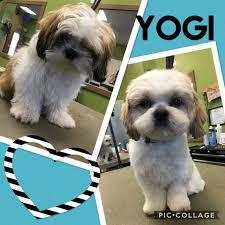 moondoggies grooming salon home facebook