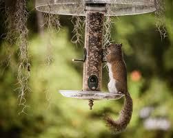 citizen science informs bird feeder dilemma gotscience org