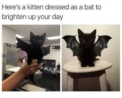 Bat Meme - here s a kitten dressed as a bat to brighten up your day meme on