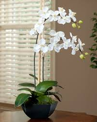faux orchids shop silk vanda orchid plant at petals