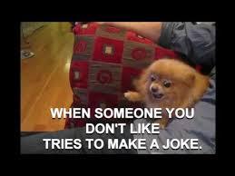 Funny Angry Memes - funny dogs video angry dog dislike joke funny memes 2016 youtube