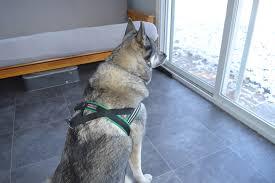 blog dash dog running inc