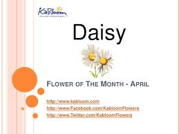 flower of the month kabloom april s flower of the month is the