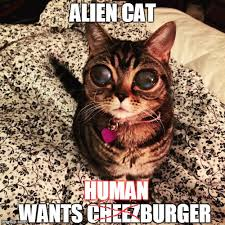 Cheezburger Meme Maker - alien cat poosh latest memes imgflip