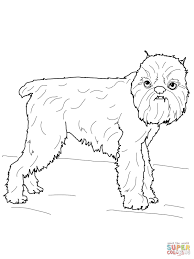 brussels griffon coloring page free printable coloring pages