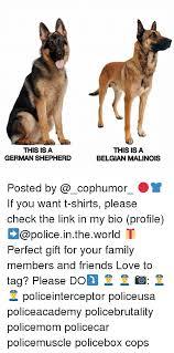 belgian shepherd timberwolf 25 best memes about belgian malinois belgian malinois memes