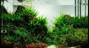 Tropical Aquatic Plants - the green machine aquascaping shop aquarium plants u0026 supplies