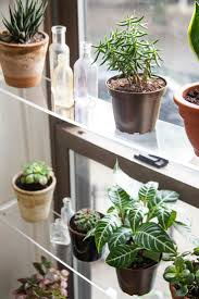 17 best images about indoor gardening on pinterest planters the