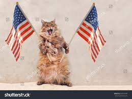 Flag Day Funny Big Shaggy Cat Very Funny Standingflag Stock Photo 660107440