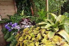 tropical shade plants solidaria garden