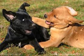 photograph dog 3 u2013 puppy play sigma blog
