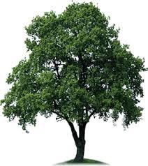 plant a tree sath