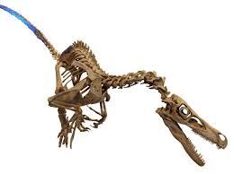 pixel halloween skeleton background file velociraptor skeleton white background jpg wikimedia commons