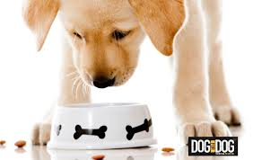 acid reflux in dogs diet dos and don u0027ts u2013 the dog bakery