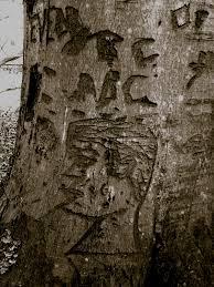 tree face file face on tree jpg wikimedia commons