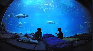 chambre aquarium dormir sous la mer pour des rêves subaquatiquesblue lobster