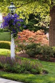 Backyard Light Post by Clematis On The Lamp Post Garden Love Pinterest Clematis
