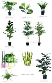 best plant for office office artificial plants find more artificial office plants to buy